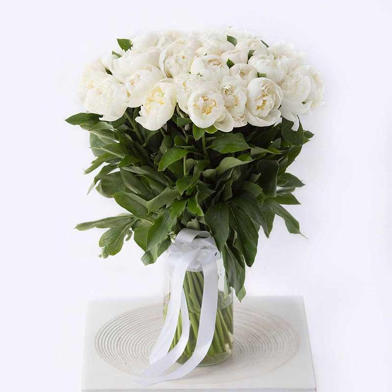 Где купить райская роза пьер де ронсар